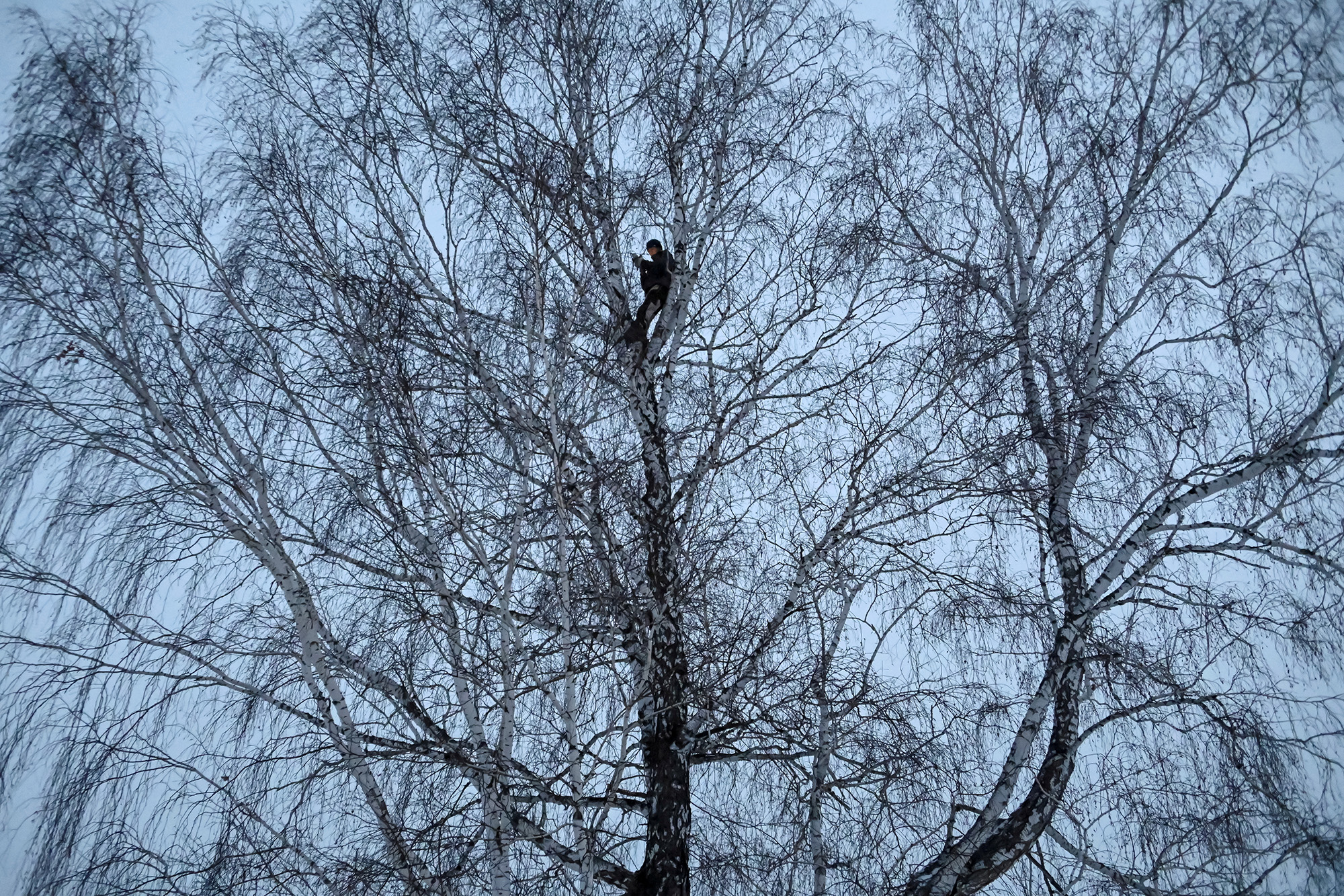 Alexei Dudoladov, student and popular blogger, is seen on a birch tree for better cellular network coverage in his remote Siberian village of Stankevichi, Russia November 13, 2020. Picture taken November 13, 2020. REUTERS/Alexey Malgavko