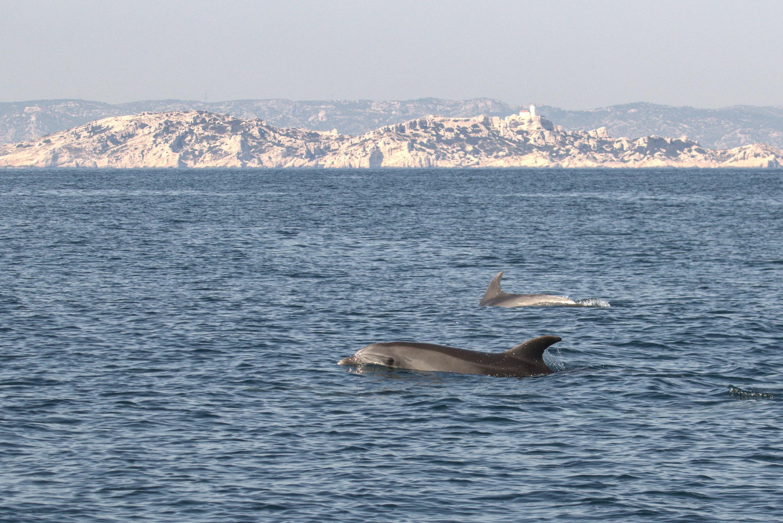 В национальном парке вКаланке во Франции дельфины уже безстеснения резвятся вводах, где раньше плавали, купались икатались налодках люди
