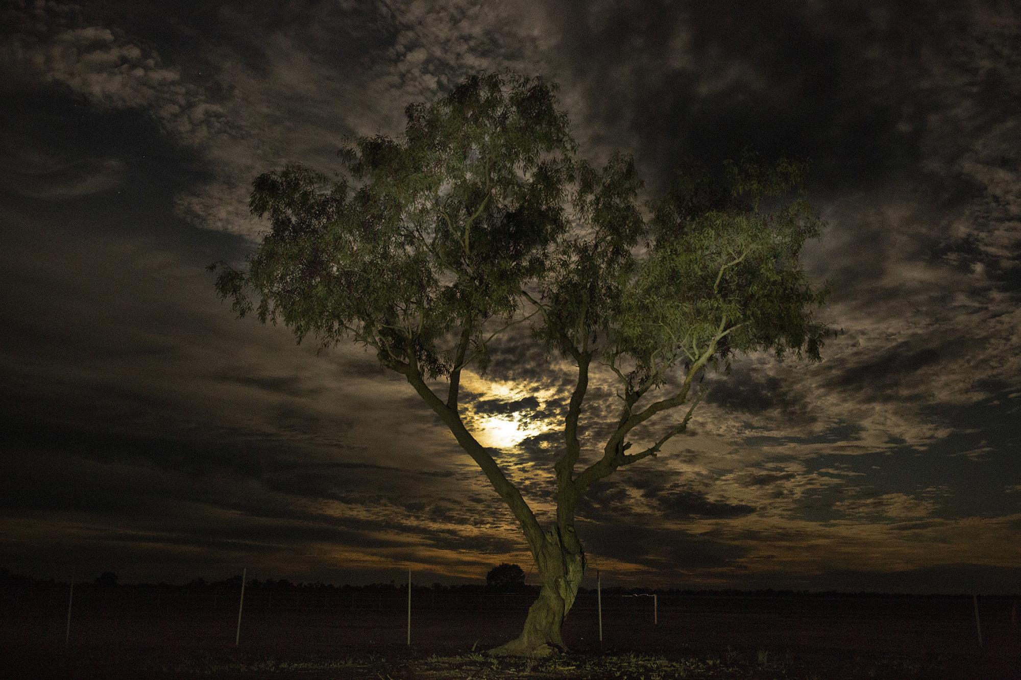 Розовая Луна частично скрылась заоблаками надАвстралией