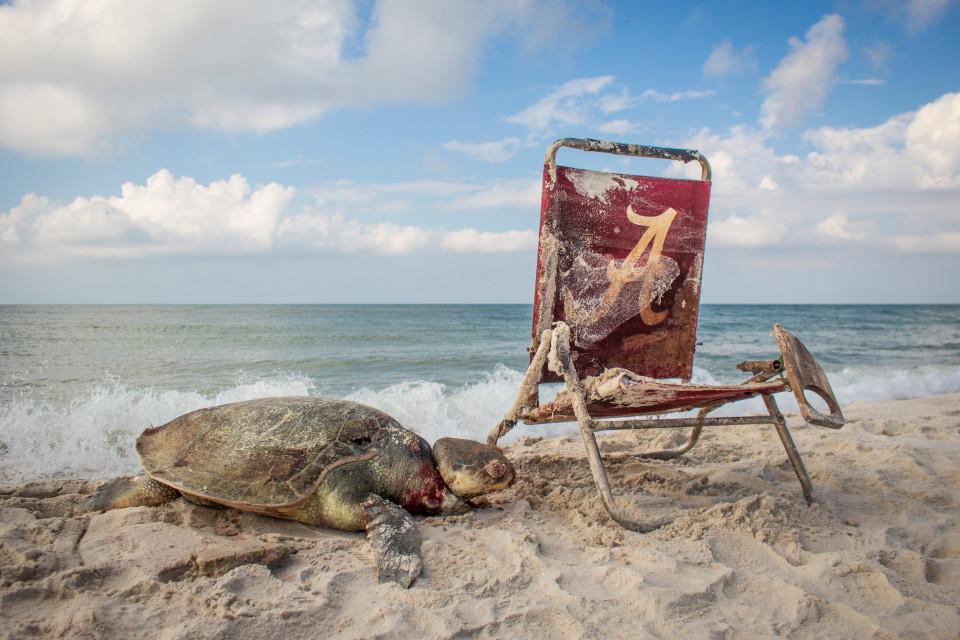 Черепаха, оказавшая жертвой загрязнения мирового океана