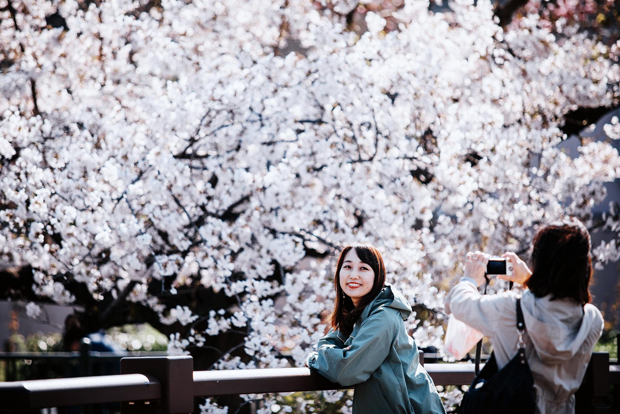 Люди фотографируются рядом сцветущими деревьями нареке Ямазаки, Нагоя, префектура Аити