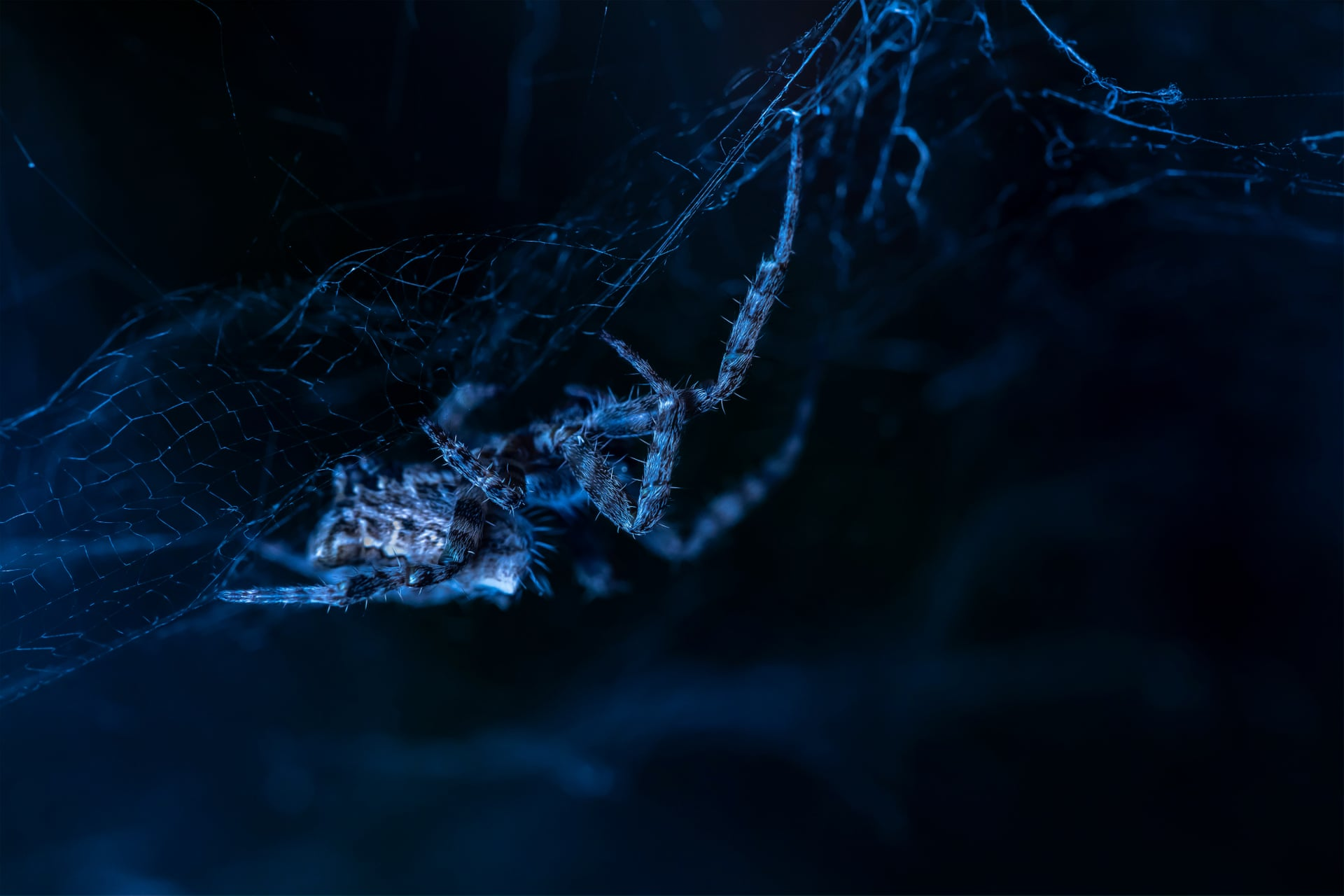 Цель этого фото — показать, что даже хищники уязвимы. Вчастности, паутина дляпауков — это убежище, где они едят, спариваются ипрячутся отхищников. Вся их жизнь разворачивается впределах их паутины. Снимок сделан вИспании.