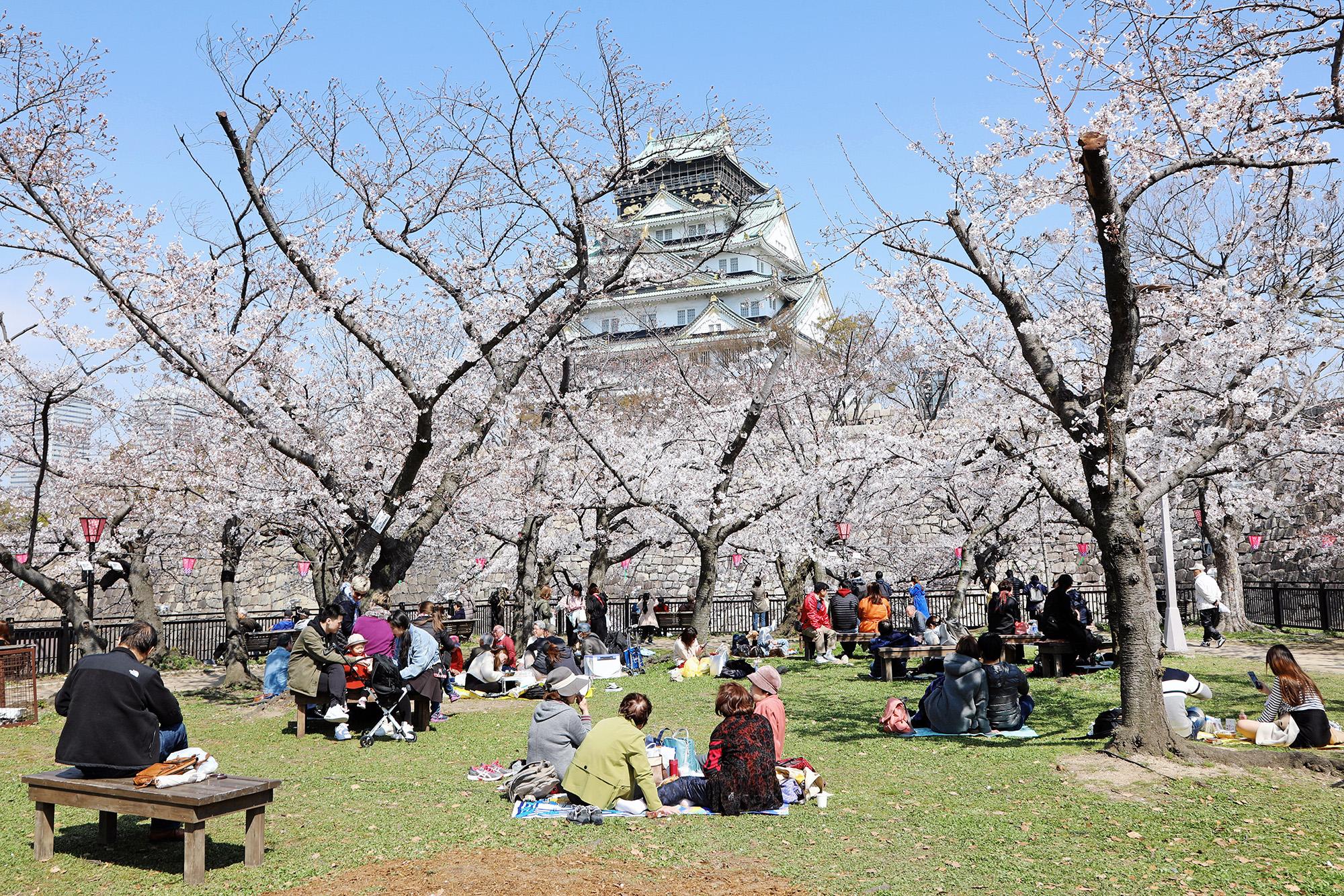 Японцы любуются цветами вишни (эта традиция любования называется ханами. — Esquire) нафоне замка вОсаке