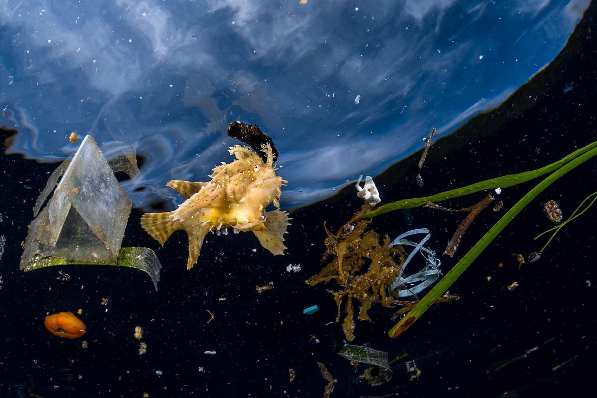 Подводная жизнь имусор