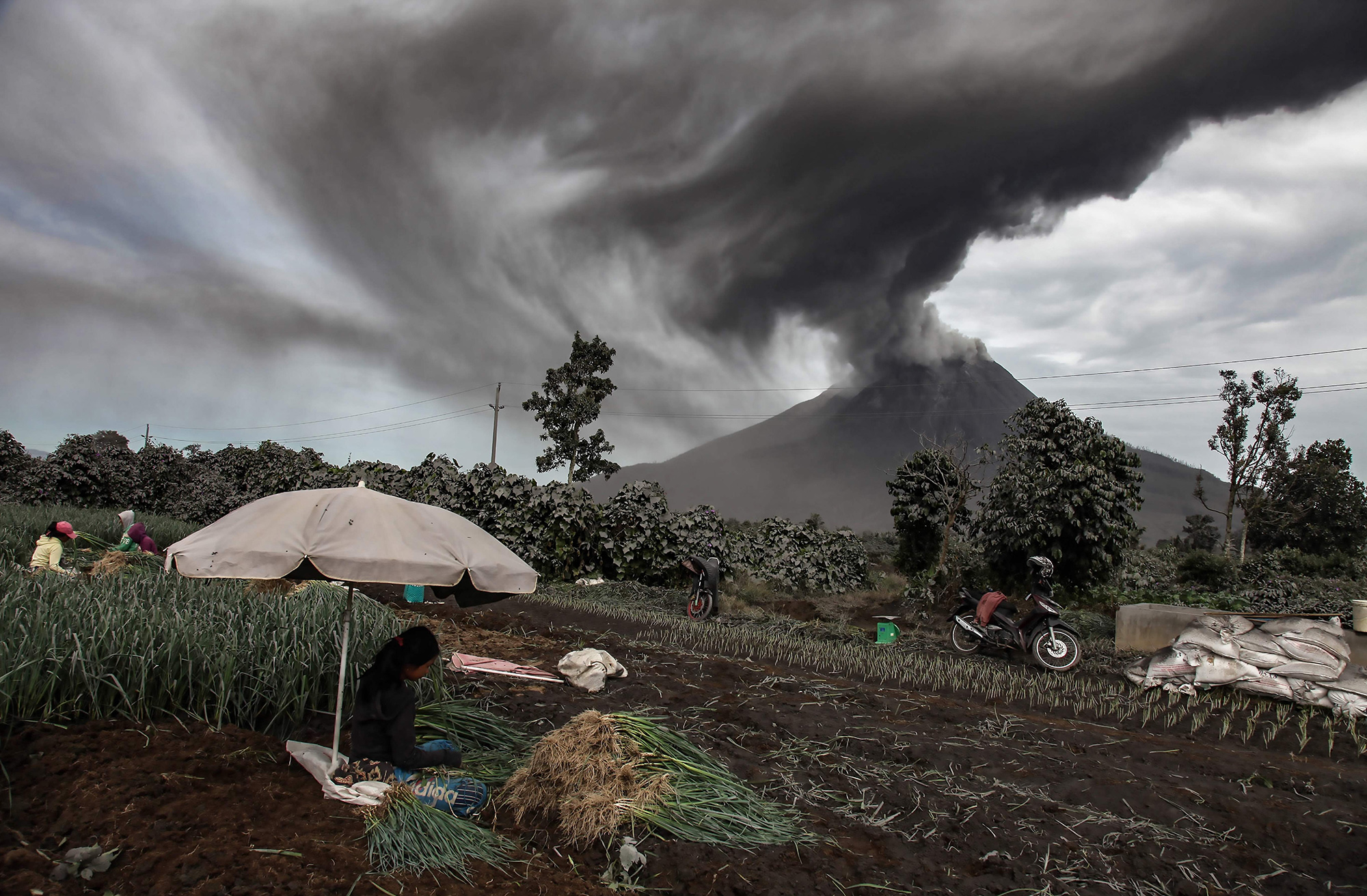 Farmers harvest their onion crops as Mount Sinabung spews volcanic ash during an eruption seen from Sukandebi village in Karo on August 14, 2020. - Indonesia is home to about 130 active volcanoes due to its position on the