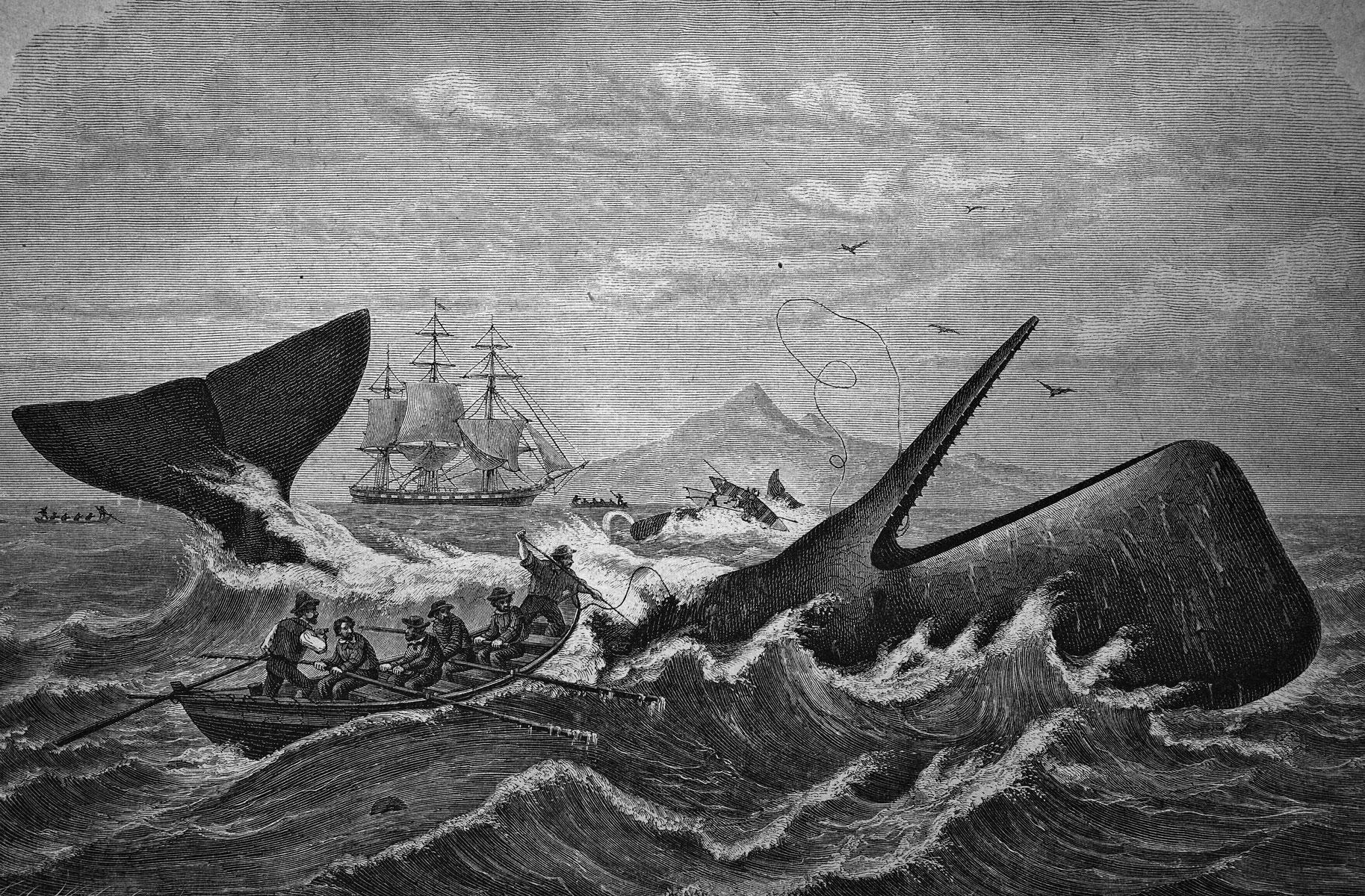 Охота накашалота. Гравюра надереве, 1870 год.