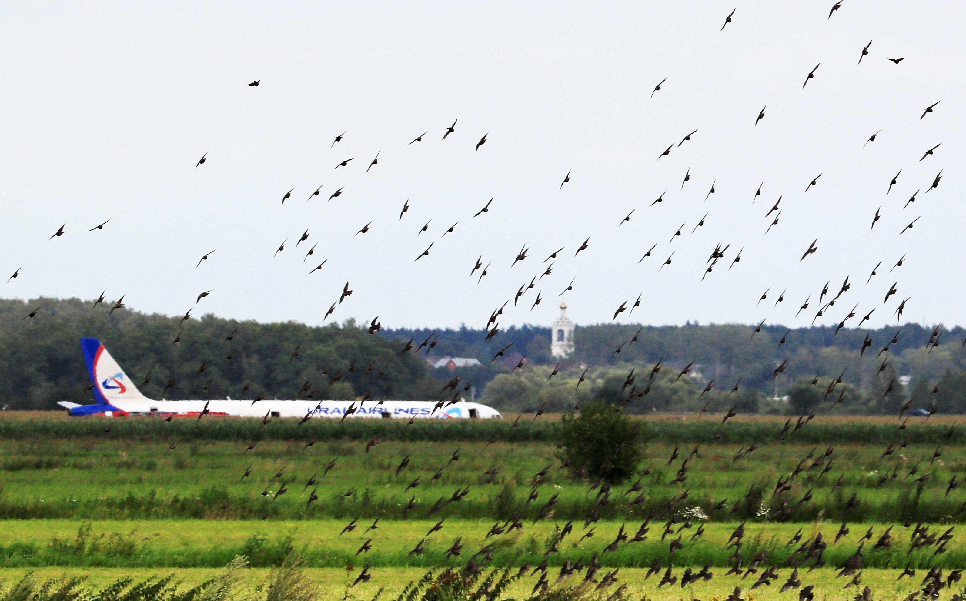 A321 после посадки накукурузное поле