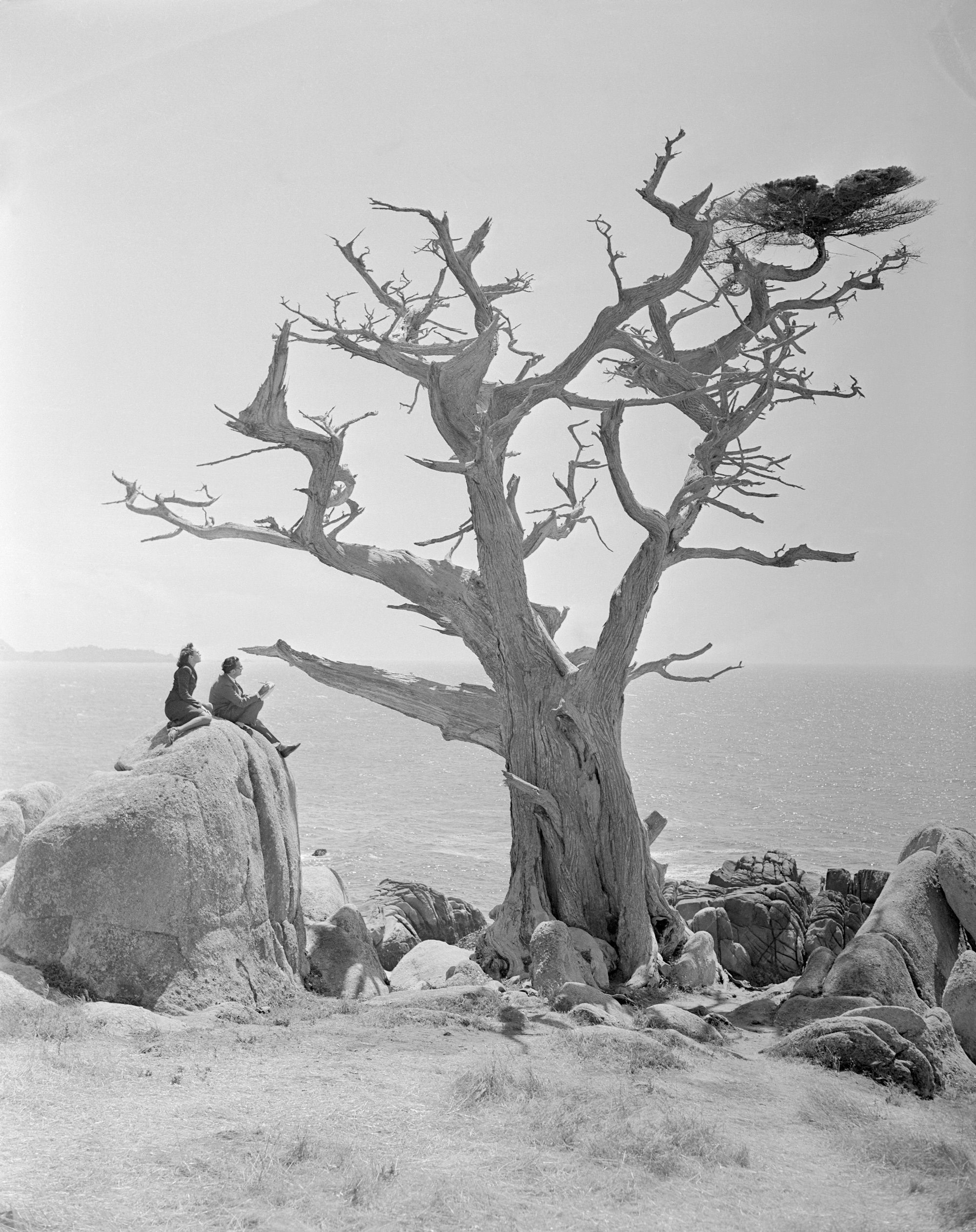 (Original Caption) One of the famous Monterey Cypress trees at Del Monte, California, is probably more of a surrealistic object than any ever drawn by noted artist Salvador Dali. However, Dali, shown with his wife, Gala, sketches the tree. It should be interesting to see his interpretation on canvas.