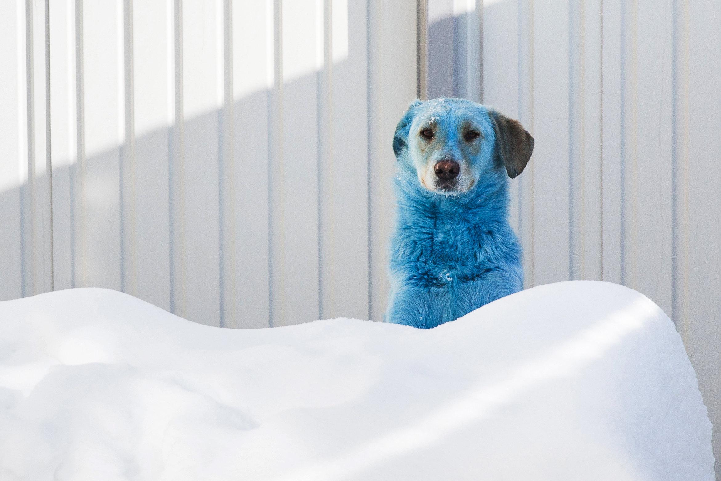 Голубые собаки вНижнем Новогороде