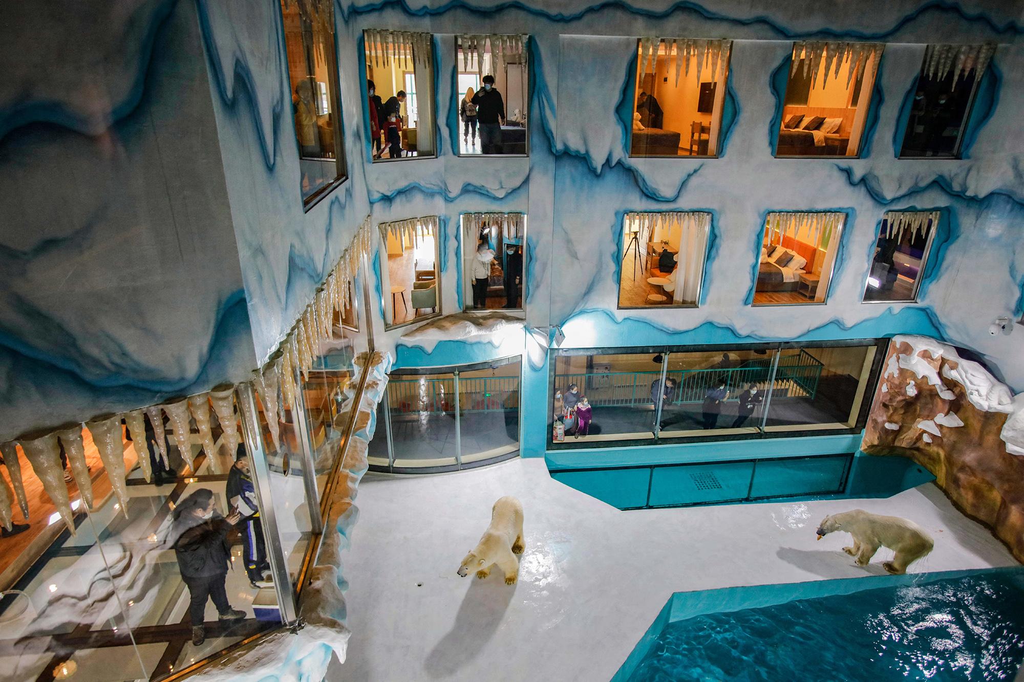 12 марта 2021 года, люди наблюдают изсвоих номеров забелыми медведями, живущими ввольере натерритории отеля Polar Bear вкитайском Харбине. Этот отель — часть тематического парка Harbin Polarland. Группа позащите прав животных PETA осудила подобное использование зверей. Белые медведи внесены Международным союзом охраны природы всписок уязвимых видов