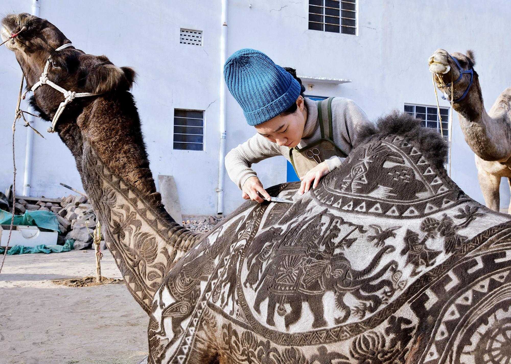 Японский парикмахер Мегуми Такейши выстригает узор нашерсти верблюда передФестивалем верблюдов вБиканере виндийском штате Раджастан насевере страны, 10 января 2019