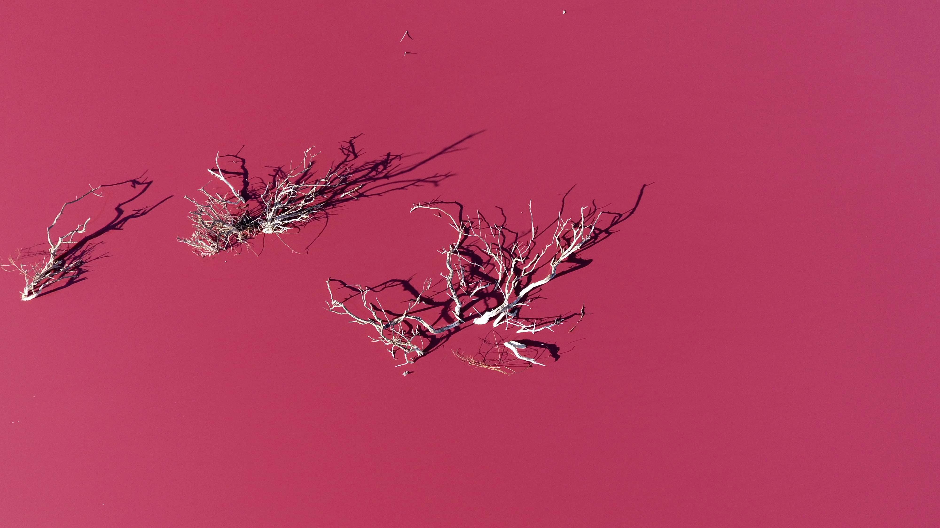 Вид своздуха налагуну Корфо, которая порозовела из-за химических отходов, вТрелью, Чубут, Аргентина, 29 июля 2021 года.