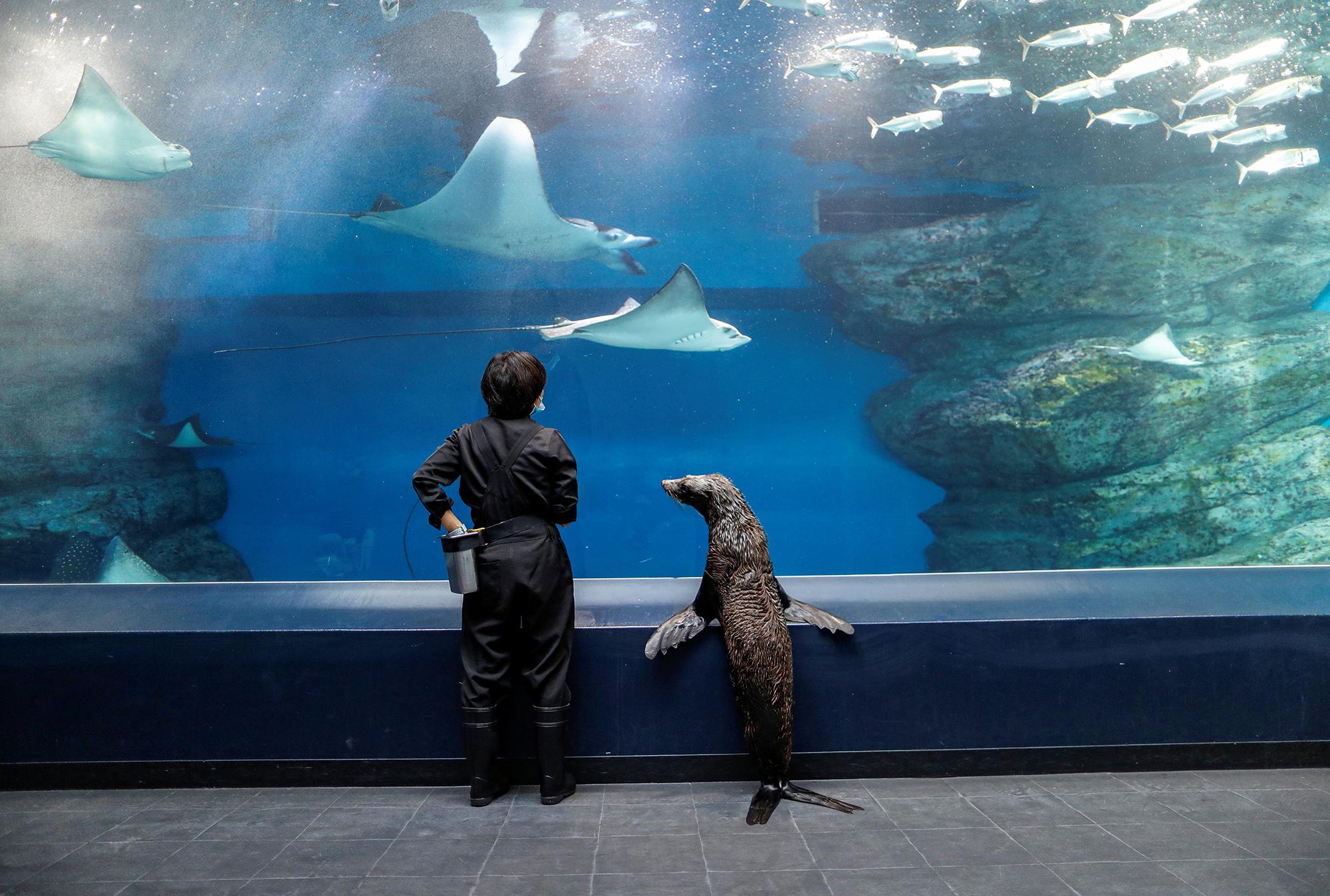 Тюлениха Шакитто исмотрительница акварирума прогуливаются поопустевшему аквапарку врайоне Синагава вТокио.