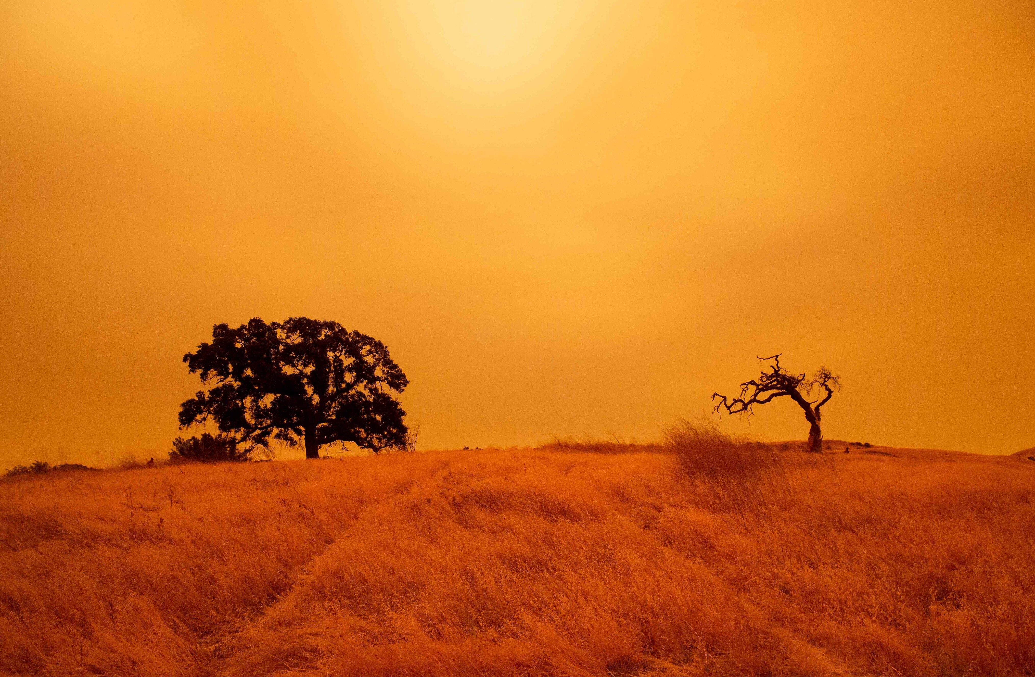 Небо вКалифорнии окрасилось воранжевый цвет из-за лесных пожаров.