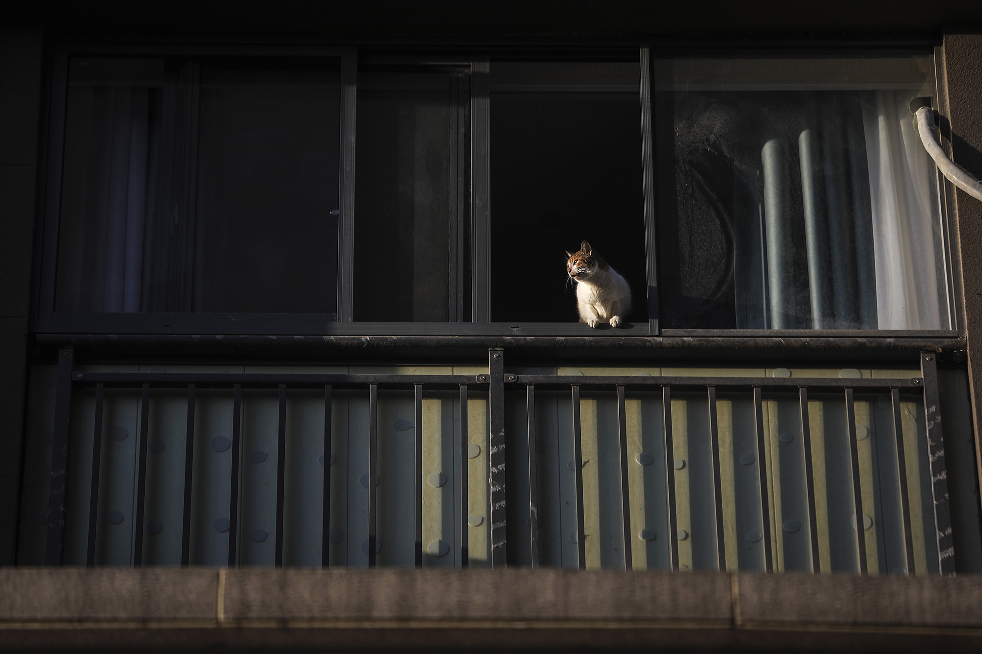 WUHAN, CHINA - FEBRUARY 16: (CHINA OUT)A cat lies on the windowsill at Optical Valley on February 16, 2020 in Wuhan, Hubei province, China. Flights, trains and public transport including buses, subway and ferry services have been closed for 25 days. The number of those who have died from the Wuhan coronavirus, known as 2019-nCoV, in China climbed to 1667. (Photo by Getty Images)
