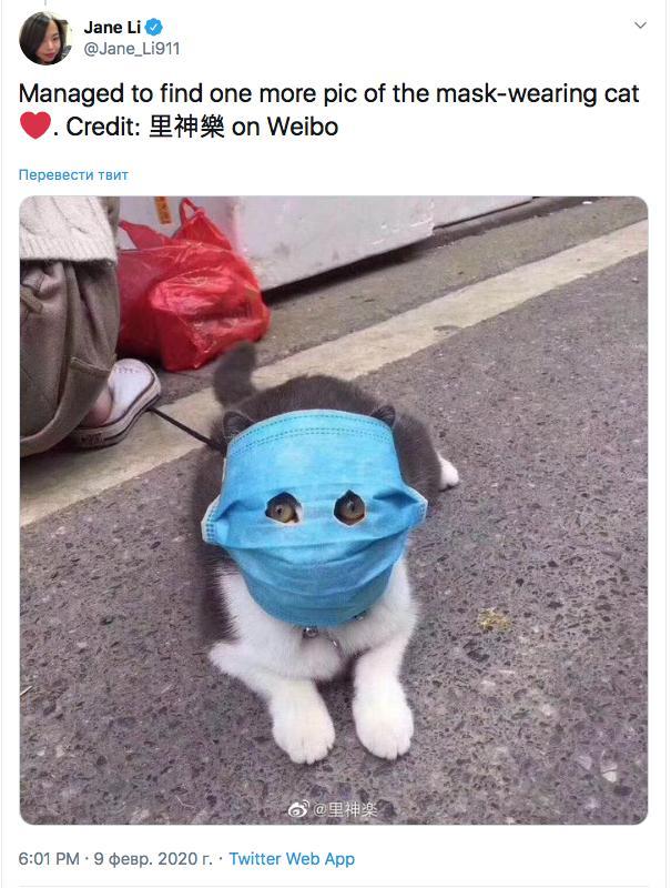 коронавирус кошек глаза