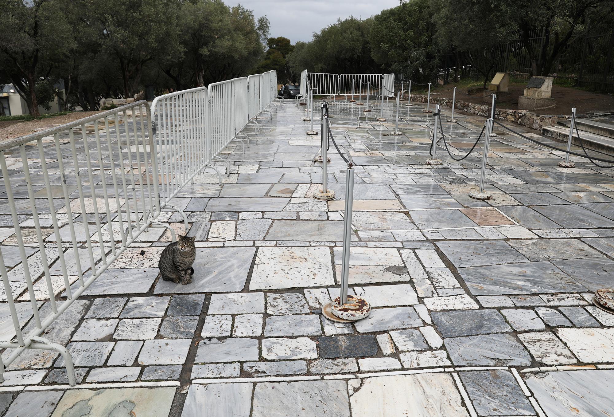 Никаких очередей вПантеон дляэтой кошки. Афины, Греция