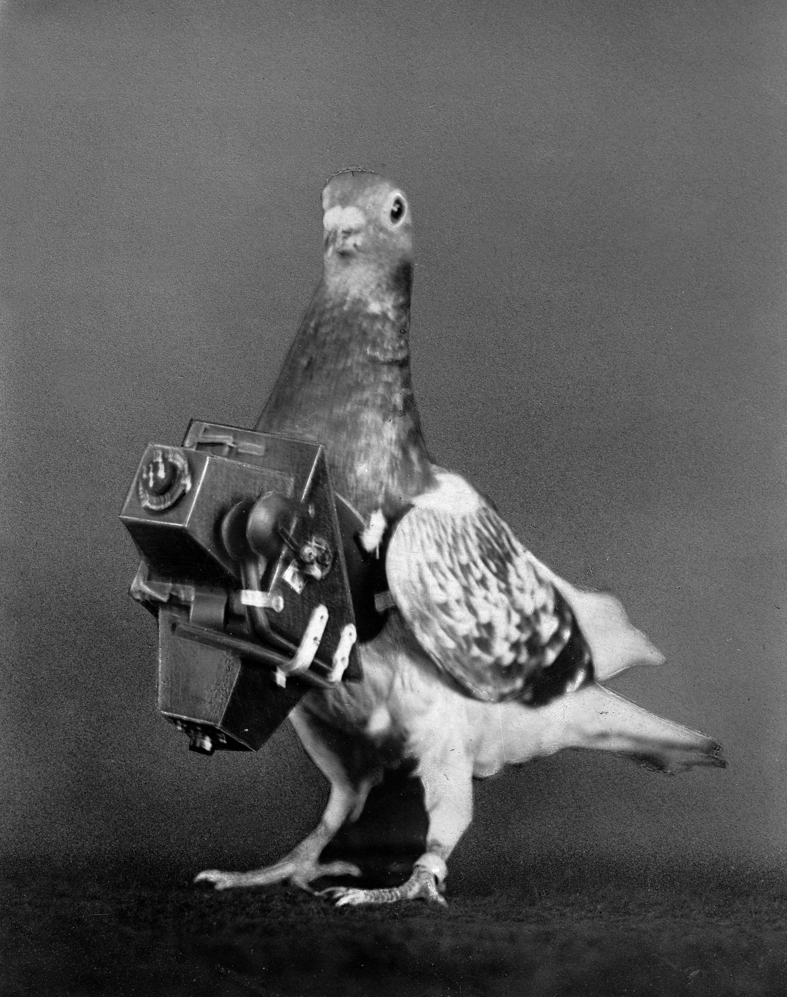 Голубь-фотограф, 1910