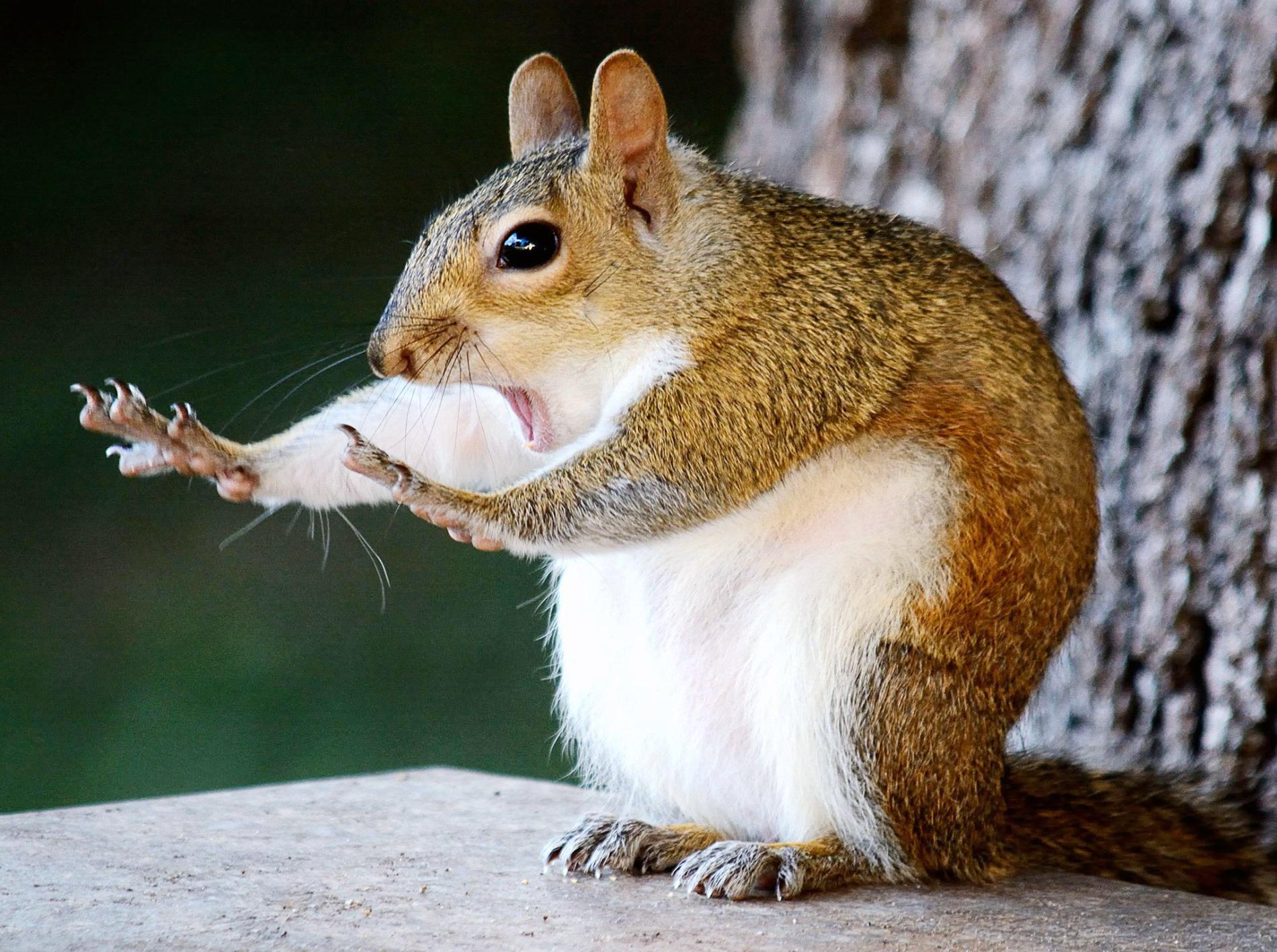 Смешные фото животных с надписью вк