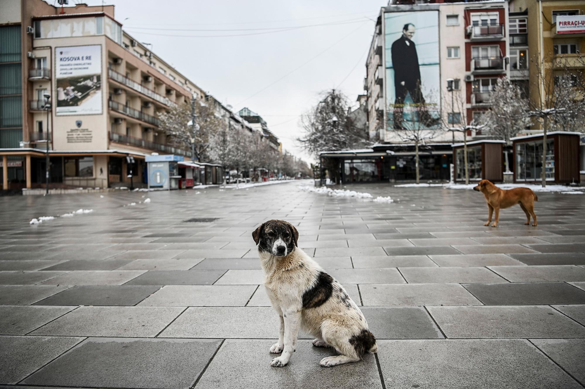 Бродячий пес напустой площади вПриштине, Косово