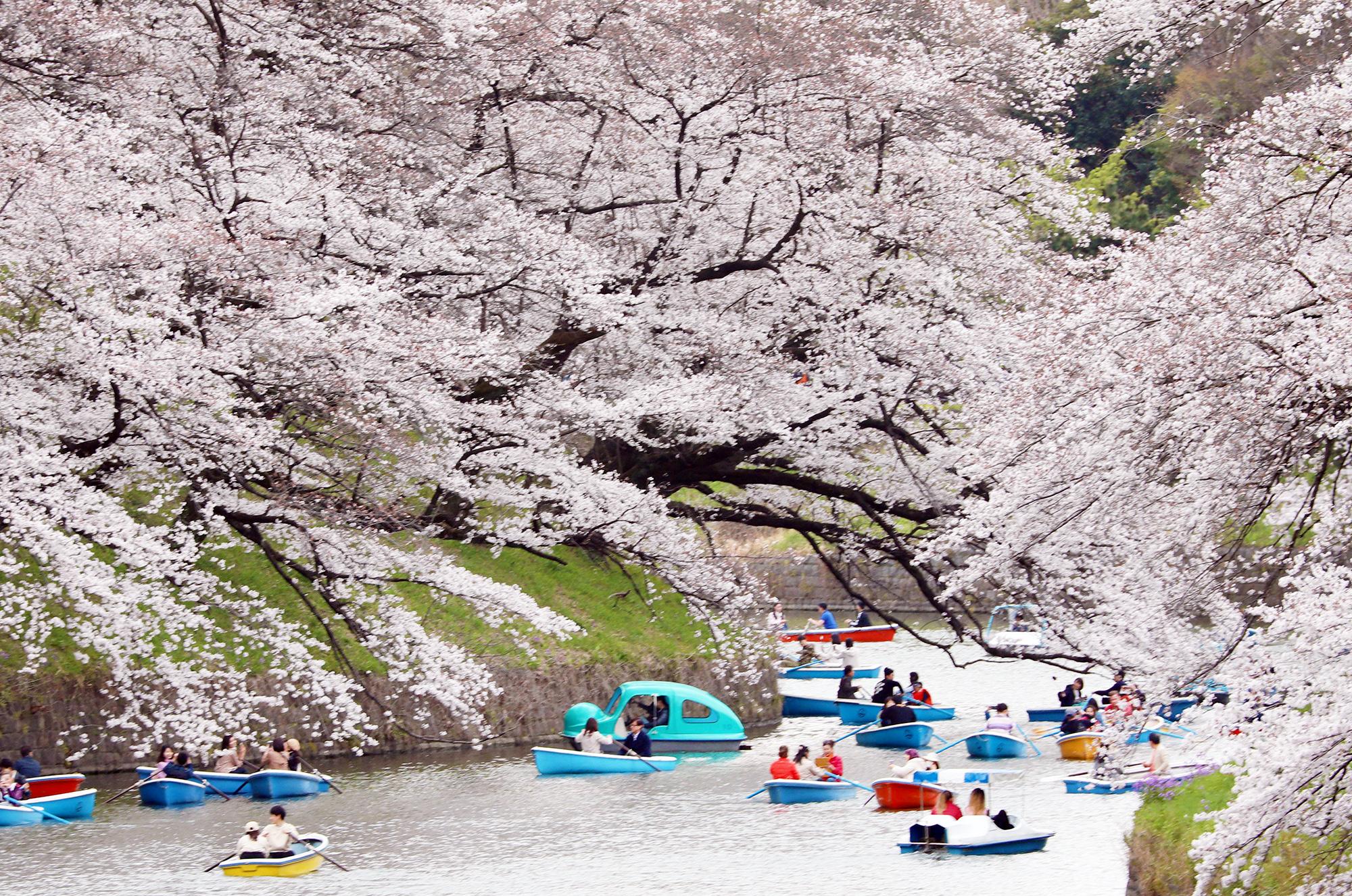 Лодки впарке Чидоригафучи вТокио