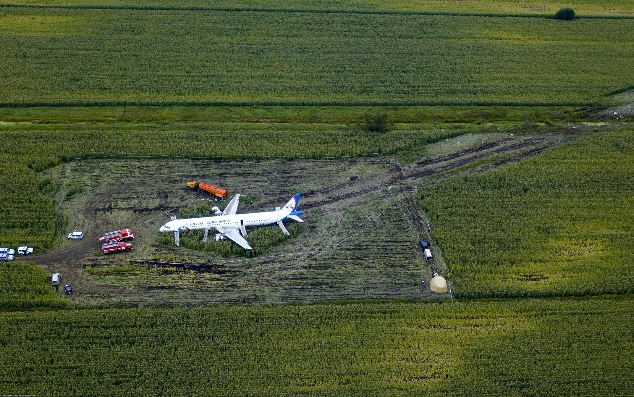 A Russian Ural Airlines' A321 plane is seen after an emergency landing in a cornfield near Ramenskoye, outside Moscow, Russia, Friday, Aug. 16, 2019. Russian President Vladimir Putin on Friday awarded the nation's highest medal, the Hero of Russia, to the pilot who managed to smoothly land his disabled passenger plane in a cornfield after a flock of birds hit both engines and knocked them out.