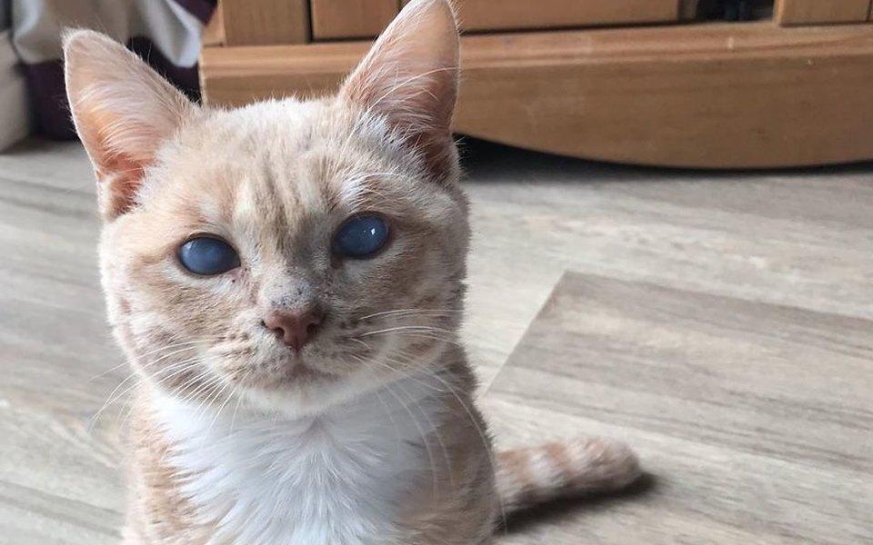 Помните кота из«Кладбища домашних животных» Стивена Кинга? Кажется, унего появился настоящий двойник