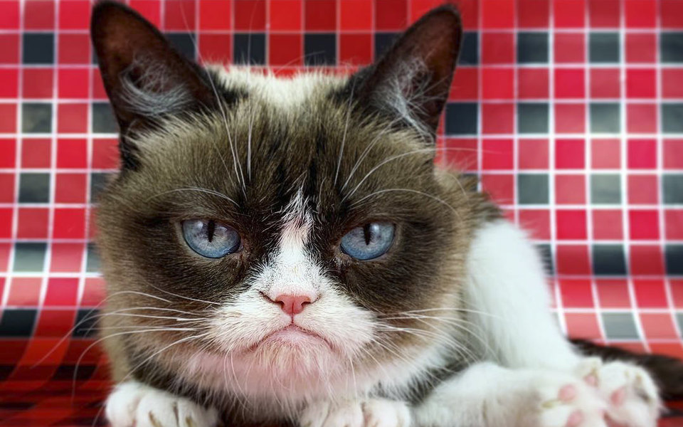 Умерла кошка-мем Grumpy Cat. Она была известна своим сердитым видом