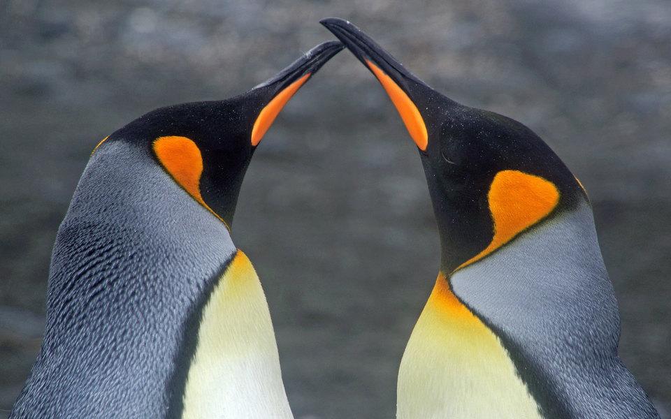 Японский океанариум вывесил схему взаимоотношений пингвинов. До такого накала страстей далеко даже мыльным операм