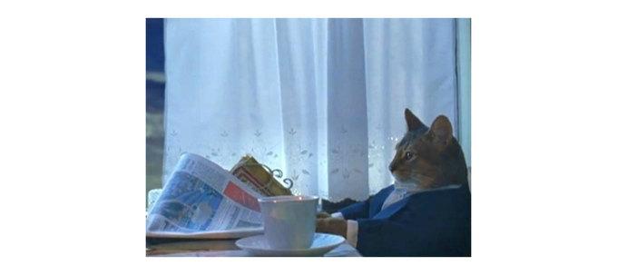 О покупке чего думает кот изэтого мема?