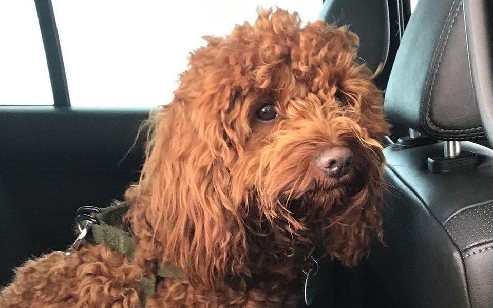 Врач изАвстралии завела инстаграм длясобак пациентов. Она фотографирует псов, которые ждут хозяев стеста накоронавирус