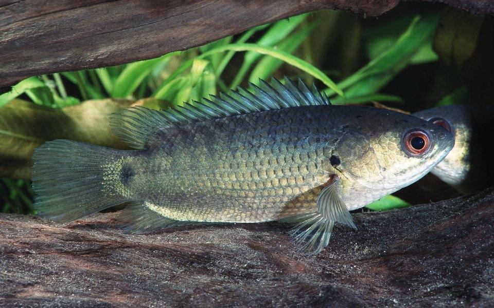 В Китае рыбам очень надоел свой пруд. Посмотрите, как они отправились напоиски нового!