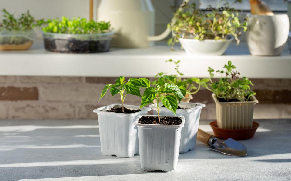 Огород наподоконнике: почему он вам нужен икак завести собственный
