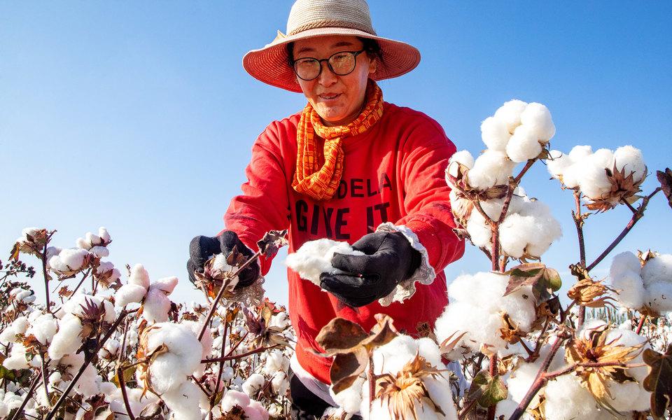 В США запретили импорт хлопка изкитайского региона Синьцзян. Ранее сообщалось, что там широко используют рабство