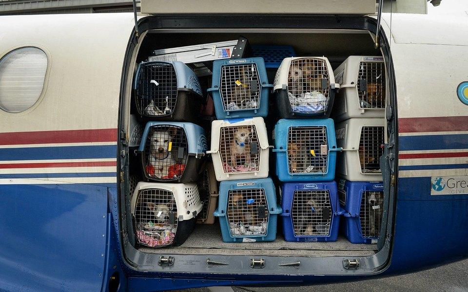 Два кота погибли после перелета «Аэрофлотом» из Нью-Йорка в Москву. Перевозчик хочет изменить правила работы с переносками в аэропортах
