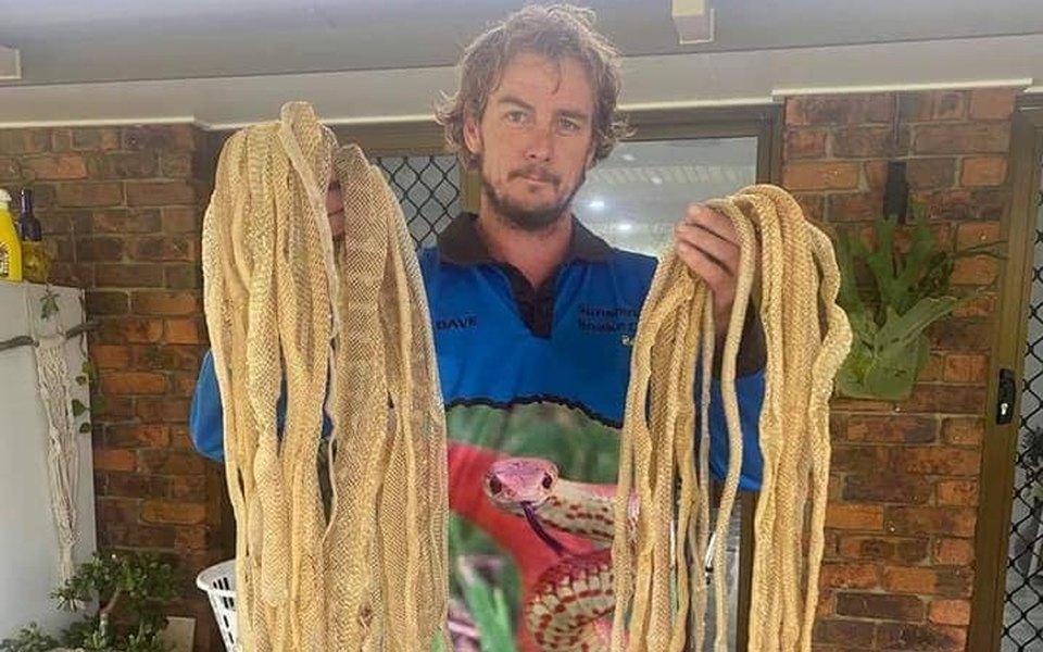 В Австралии ловцы змей нашли на крыше дома около 50 змеиных шкур