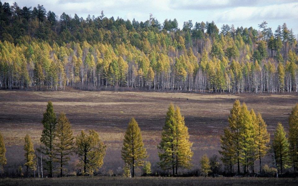 Минприроды внесло законопроект, разрешающий капитальную застройку лесов