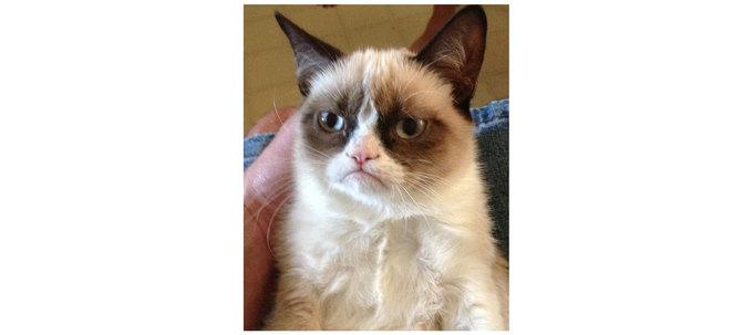Как зовут кота нафото?