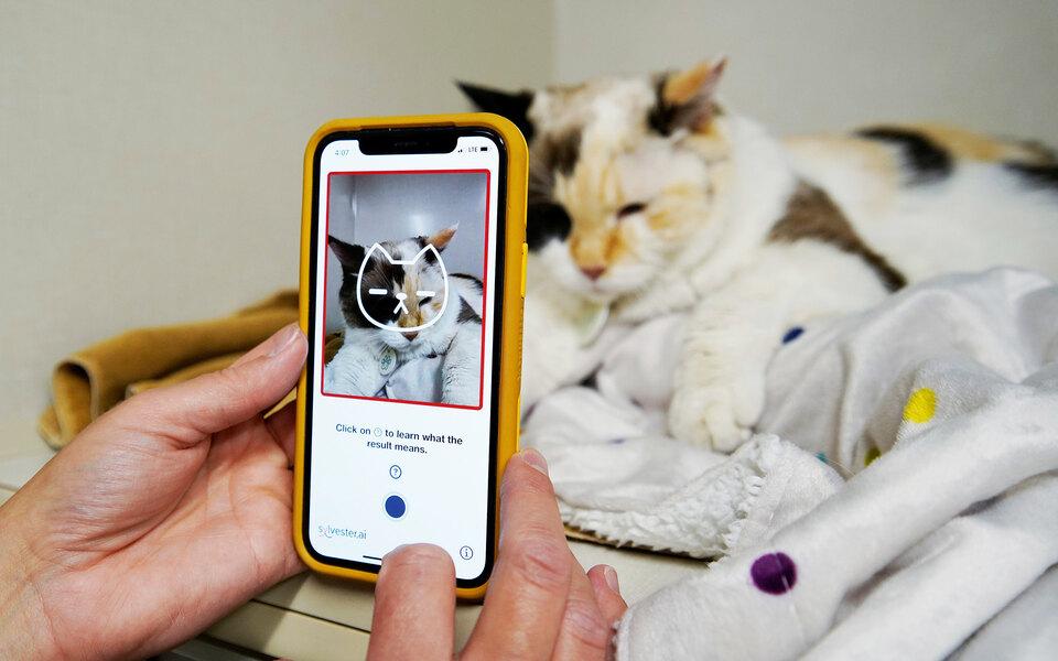 Канадские разработчики выпустили приложение, которое по фото определяет состояние здоровья кошек