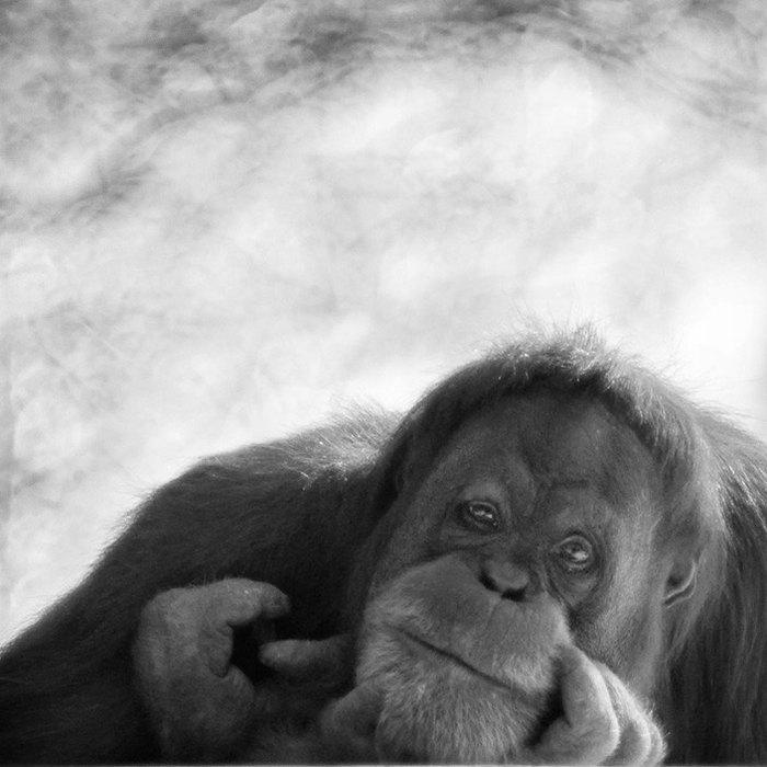вспышке картинки грустная обезьяна как именно использовать