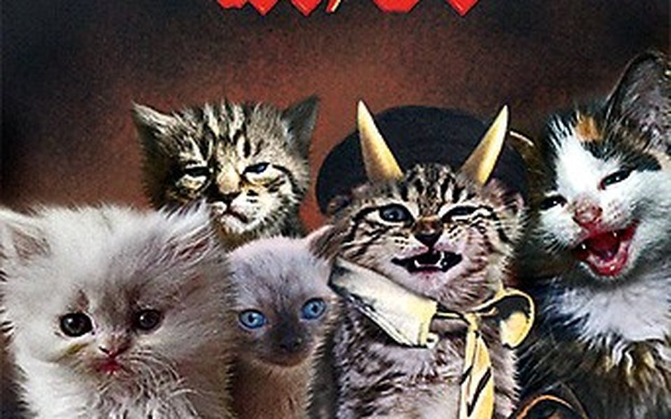 Чего котят женщины