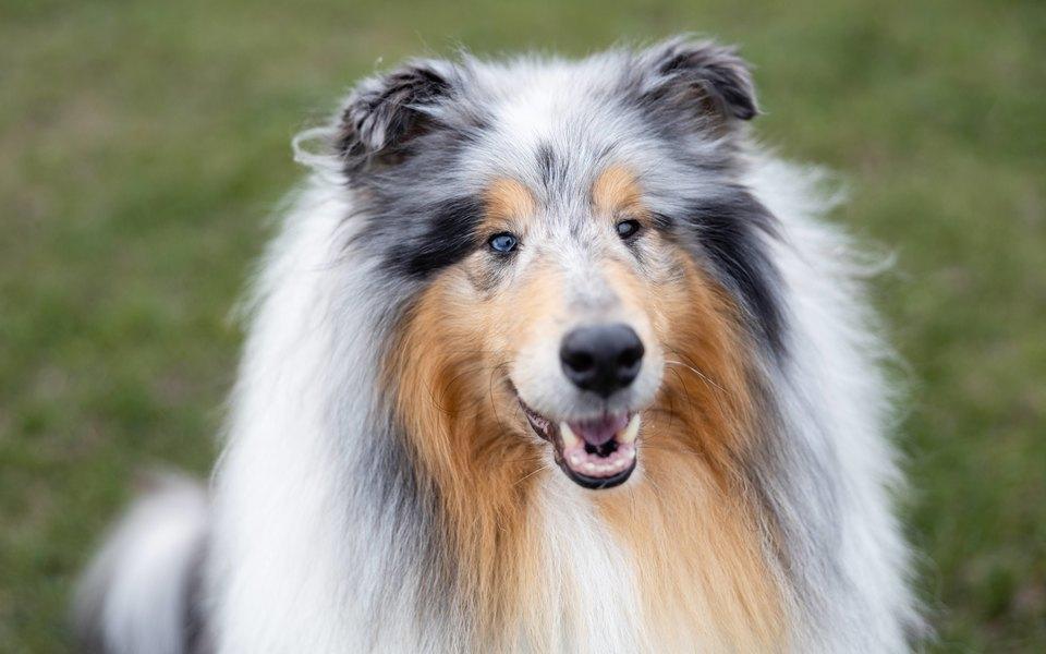тест на коронавирус собак