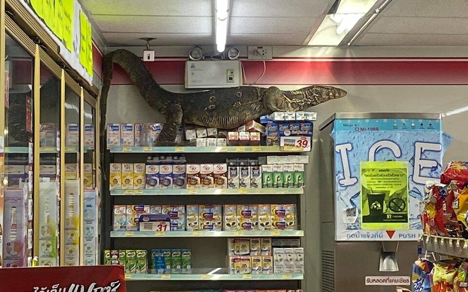 Годзилла существует: гигантский варан устроил разбой всупермаркете вТаиланде