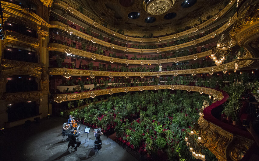 Оперный театр «Лисео» в Барселоне открылся концертом для растений. И это неслучайно