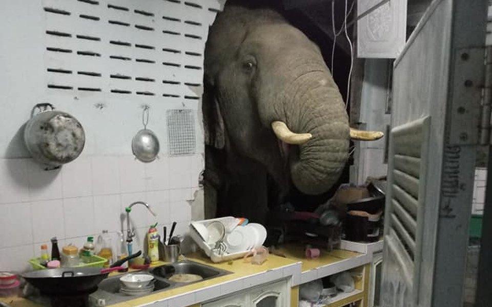 В Таиланде слон проломил стену жилого дома, потому что учуял запах риса на кухне