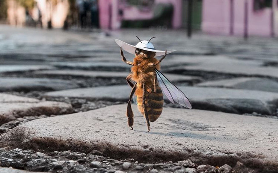 В инстаграме появился первый вмире блогер-пчела