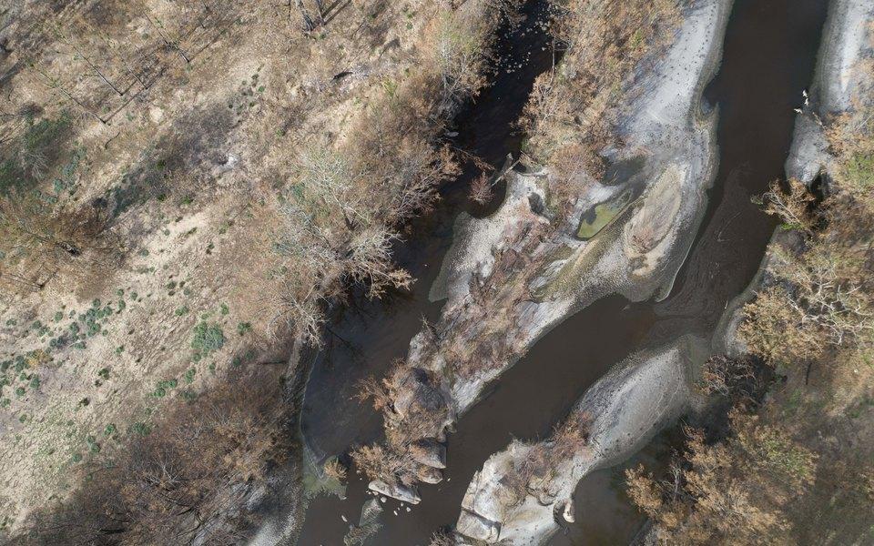 Cотни тысяч рыб гибнут вАвстралии из-за пожаров. Реки покрыты пеплом