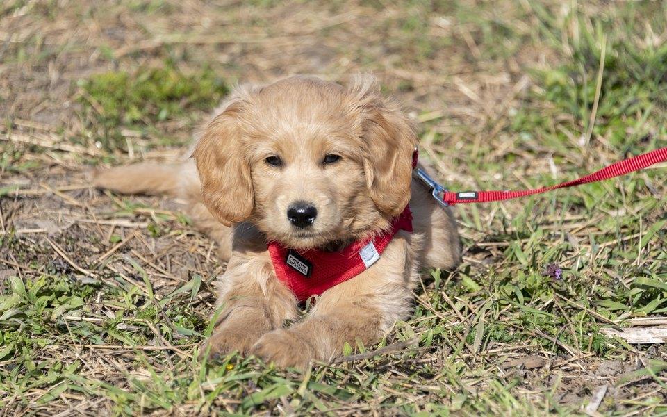 В США теперь можно забрать собаку из приюта, познакомившись с ней в Zoom