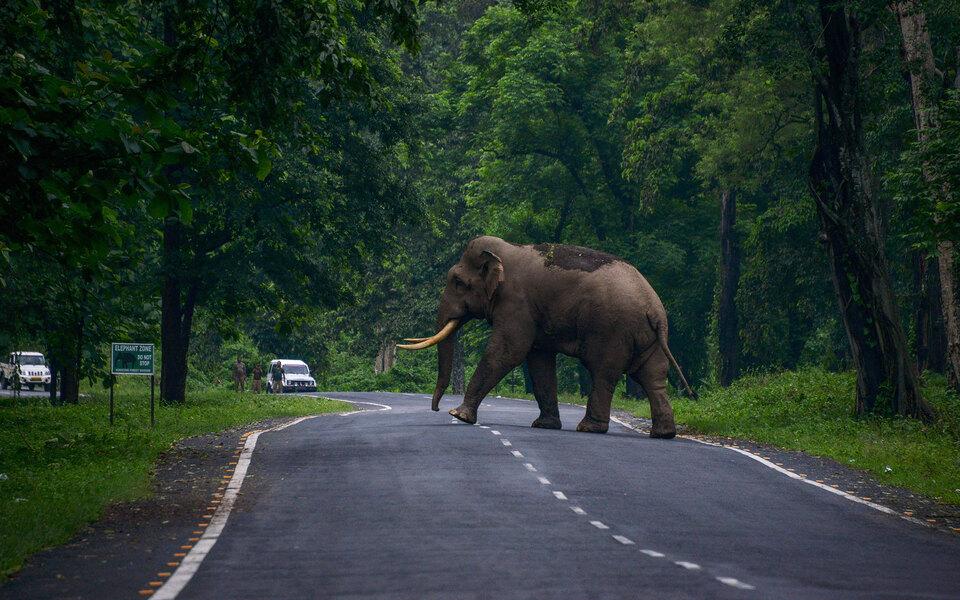 В Таиланде слон, разгромивший кухню в поисках риса, вернулся в город и вломился в еще один дом — на этот раз ради кошачьего корма