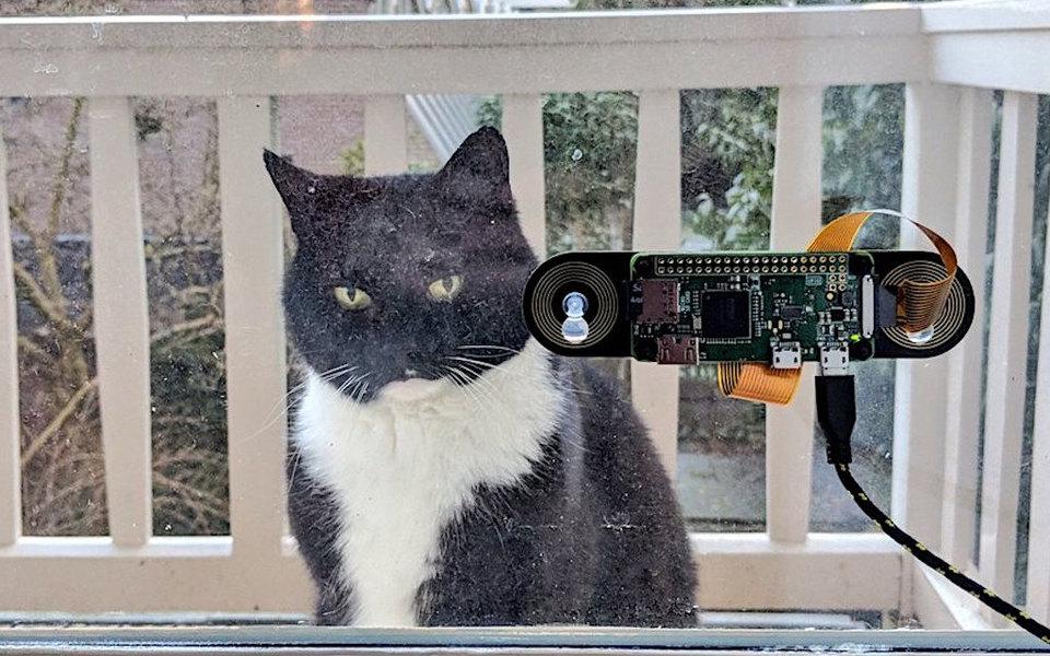 Голландский программист разработал систему распознавания морды кота